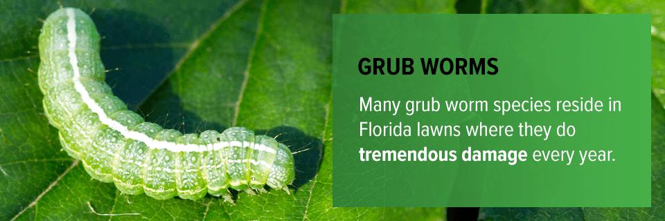 Grub Worms