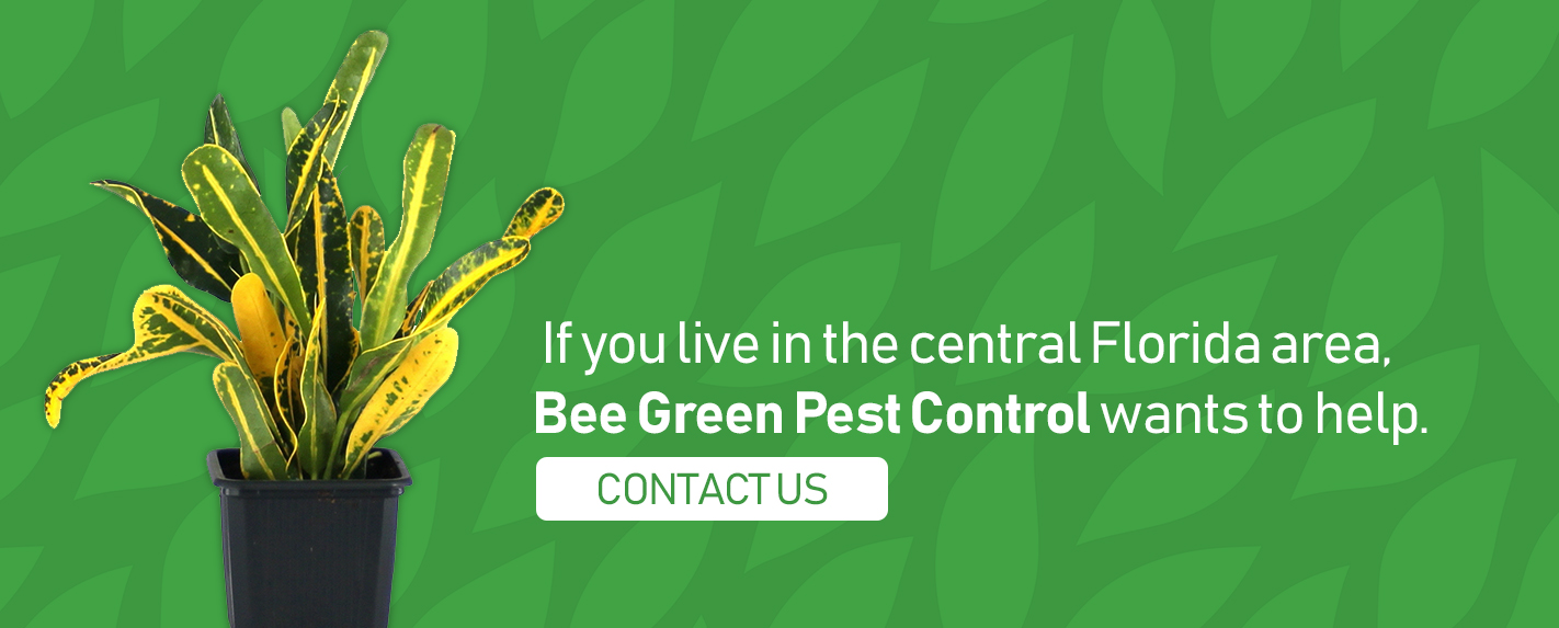 Bee Green Can Help with Croton Plant Care